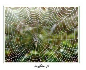 شکل2-آرایش عنکبوتی پلان سازه